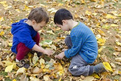 Children in autumn leaves Stock Images