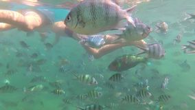 Children bathe in the sea with fish. Scuba Diving in Masks. Children swim in the sea with fish. Snorkelling stock video footage