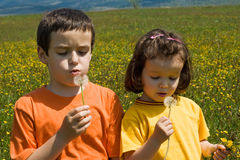 Children blowing dandelion Royalty Free Stock Photos