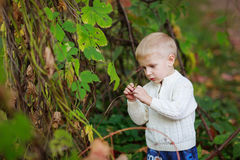 Children boy in a bright sweater studies, examines plant in the Royalty Free Stock Photos