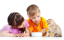 Children boy and girl feeding attractive kitten Royalty Free Stock Image