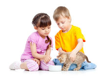 Children boy and girl feeding attractive kitten Royalty Free Stock Images
