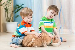 Children boys feeding red cat Stock Photos