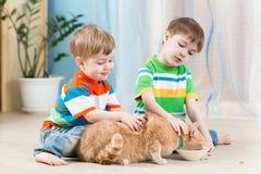 Children boys feeding red cat Stock Photos