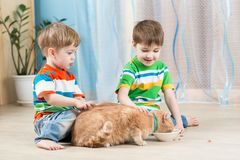 Children boys feeding red cat Stock Photo