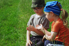 Children with bug. In grass Royalty Free Stock Photos