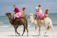 Children on camels Royalty Free Stock Photo