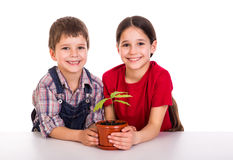 Children caring for potted plant Royalty Free Stock Images