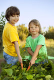 Children with a carrot in garden. Two boys with vegetables in fa Stock Photos