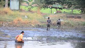 Children catch fish in mud of pond at Countryside Nonthaburi Thailand. Mud is a mixture of water and any combination of soil, silt, and clay, and usually forms stock video