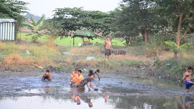 Children catch fish in mud of pond at Countryside Nonthaburi Thailand. Mud is a mixture of water and any combination of soil, silt, and clay, and usually forms stock footage