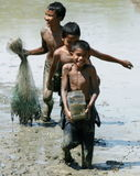 Children catch fish in paddy field stock photos