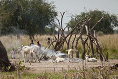 Children and cattle in south sudan royalty free stock image