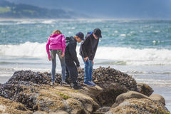 Children checking out tide pools on Oregon Coast Royalty Free Stock Photography