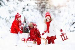 Children with Christmas tree. Snow winter fun for kids. Children with Christmas tree on wooden sled in snow. Kids cut Xmas tree. Boy and girl on sledge in snowy stock image