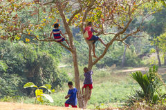 Children are climbing tree Royalty Free Stock Images