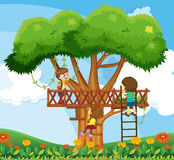 Children climbing up the tree in the garden Royalty Free Stock Photography