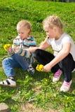 Children collect flowers. Idelayut bouquet of dandelions Stock Image