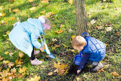 Children collecting yellow autumn leaves Stock Photos