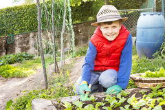 Children that collects salad in the garden vegetable Stock Images