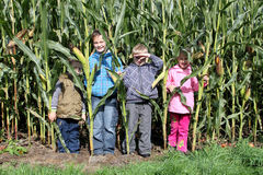 Children in the corn Stock Image