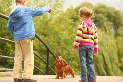 Children with dachshund outdoor Stock Photography