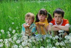 Children in dandelion field Stock Photo