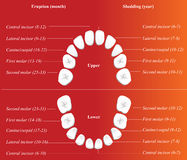 Children dental chart stock photo