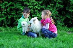 Children with dogs. Brother and sister playing with the dogs in the garden Stock Image