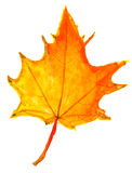 Children drawing - autumn yellow maple leaf Stock Image
