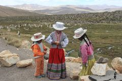Children dressed in traditional clothing in The Andes. Three children dressed in traditional clothing in the Pampa of Arequipa, with a group of Alpacas as a Stock Image