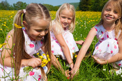 Children on Easter egg hunt. Children on a beautiful sunlit meadow in spring on an Easter egg hunt having just found a nest Stock Image