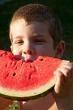 Children eat watermelon slice Stock Photography