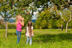 Children eating apples Stock Image