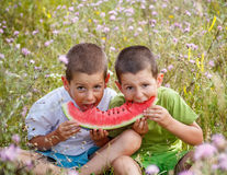 Children eating red watermelon Stock Photography