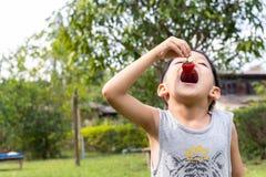 Children eating strawberries stock photo