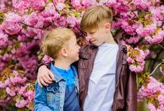Children enjoy warm spring. Boys posing near sakura. Kids spring pink flowers of sakura tree background. Botany concept. Brothers enjoying cherry blossom royalty free stock image