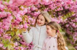Children enjoy warm spring. Girls posing near sakura. Lost in blossom. Kids on pink flowers of sakura tree background. Kids enjoying cherry blossom sakura royalty free stock photos
