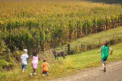 Children Enjoying the Beaurtiful Country Side Royalty Free Stock Image