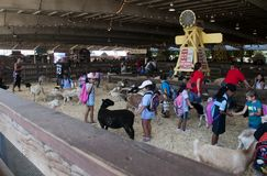 Sheep and goats at Petting Zoo  exhibit at the Los Angeles County Fair in Pomona. Children enjoying the variety of sheep, goats and even a cow in the Petting Zoo Royalty Free Stock Image