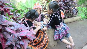 Children Ethnic Hmong wear costume traditional and playing with friends. CHIANG MAI, THAILAND - DECEMBER 28 : Children Ethnic Hmong wear costume traditional and stock video footage