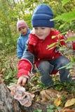 Children explore shelf fungus stock image