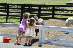 Children and Farm Animals. Two girls leaning over fence to pet farm animals Royalty Free Stock Photo