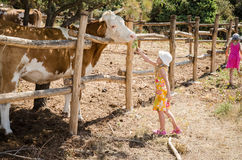 Children in the farm Royalty Free Stock Photography
