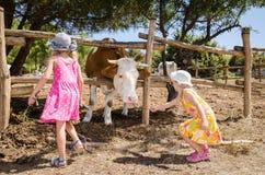 Children in the farm Stock Photo