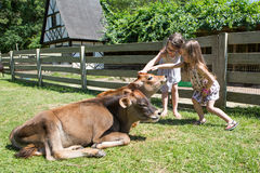 Children at the farm. Two girls petting cows at the farm royalty free stock image