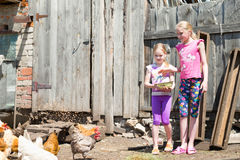Children fed chickens. Children feed the animals on the farm royalty free stock photos
