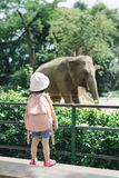 Children feed Asian elephants in tropical safari park during sum. Mer vacation. Kids watch animals royalty free stock photos