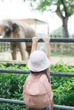 Children feed Asian elephants in tropical safari park during summer vacation. Kids watch animals stock photography