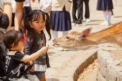 Children feed deer Stock Photography